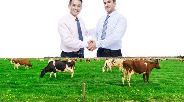 Đầu tư vào Quỹ nông trại bò sữa Úc từ 500.000AUD, <br></noscript><img class=