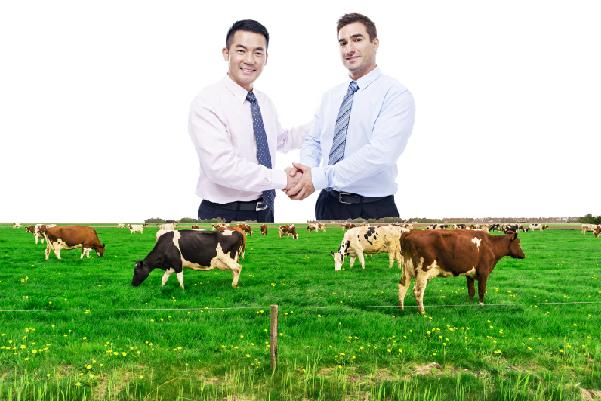 Đầu tư vào Quỹ nông trại bò sữa Úc từ 500.000AUD,  lợi nhuận 12%/năm